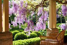 Gardening / by Debbie Garner Gosney