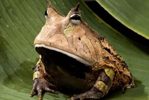unusual frogs