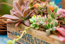 Succulents / I will begin with saying I am a known succulent addict. I have a great love for succulents and cactus. I don't believe one could ever have enough of these wonderful plants. I grow my collection daily! Love my succulent babies!  / by mandee anderson