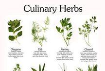 good eats: culinary herbs