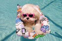 Puppies, cute & funny ones! / Puppies, puppies, puppies.  I love my Chihuahua!