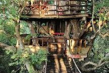 High Up In The Trees! / Tree houses! / by Suzanne Zenk