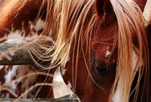 At / Horses