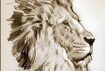 My own drawings / ©Dieter Braun Illustration
