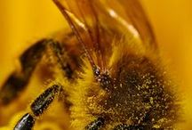 méz-méhek