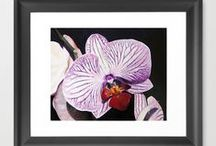 Framed Prints / Looking to add some art to your life, how about ordering a framed print, ready to mount on any wall in you house, or give as a special gift to someone you love!
