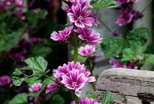 Flowers 2 / Flowers