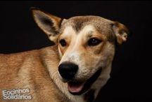 Aíko / O Aíko é um cãozinho fantástico, muito jovem, muito meigo, simpático e brincalhão, adora correr e jogar à bola, adora abraços e carinhos é o verdadeiro cãopanheiro de quem quiser partilhar com ele a vida e o estime como merece. envie e-mail para uppa.adoptantes@gmail.com