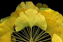 #Flower / Flower designs