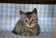 Cats / Gatos, Gatas, Gatitos