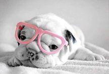 • Cute & Funny animals •