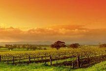 Barossa Valley & Clare Valley