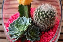 RMUC.17-Inspired Pieces and Projects / On-trend with all-things RMUC.17, Tucson, American Southwest and... Cacti!