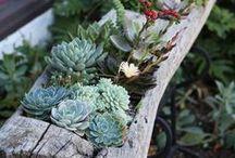 Succulent and Cactus Success