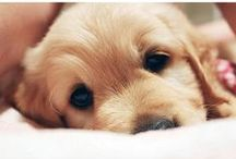 Puppy Love, A Dog's Life
