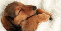 Animales | Mascotas