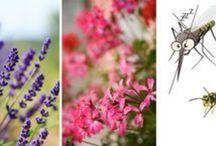 Plantes Répulsives et autres