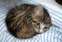Felis.. / Cat cat and cat