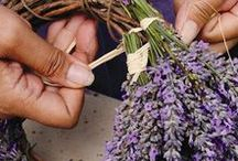 AROMATHERAPY / Aromatherapy / essential oils / DIY beauty & health