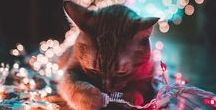 Navidad / Imágenes, diseños y todo lo que puedas imaginar de la mejor época del año