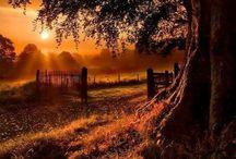 Seasons   ( Fall )