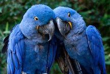 Birds   ( Exotic )