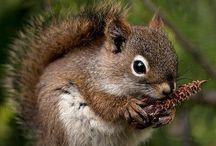 Animals   ( Squirrels )