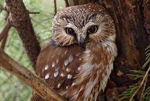 Birds   ( Owls )