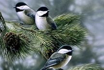 Birds   ( Chickadees, Nuthatch & tits )