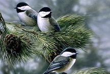 Birds   ( Chickadees, Nuthatch & tits )