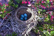Birds   ( nest )