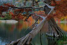 Nature   ( Trees,bark, bushes & twigs )