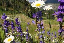 Flowers   ( wild flowers )