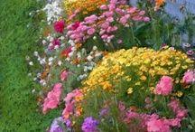 Gardens yard stuff / by Myrtle Lemon