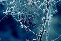 Spiderweb / Spiderweb is a board about the unique Art of spiders.