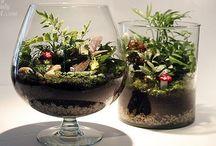Home and garden    ( terrariums )
