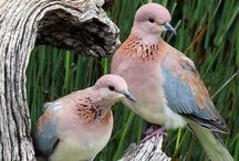 Birds   ( doves )