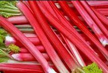 Rabarber  Opskrifter / Rabarber kan bruges i både det salte og søde køkken. Rabarber tilfører en flot farve og en skøn syrlighed.