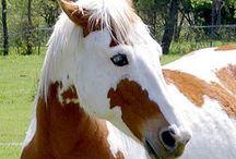 Horses / ❤️❤️❤️