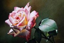 Art   by Jacqueline  Gnott    ( watercolor )