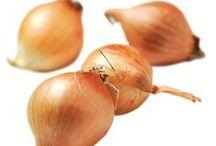 Løg    zittauerløg      rødløg     Forårsløg     Perleløg   Salatløg    Skalotteløg / Løg dyrkes i stor udstrækning over næsten hele verden. Der er mange former for løg, som alle er nært beslægtede. Ud over kepaløg, kendes især skalotteløg og hvidløg, men pibeløg, kinaløg, forårsløg og ramsløg er også spændende råvarer.