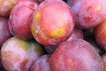 Blommer  dansk tekst / blommer   oval stenfrugt fra blommetræet; kan være blå, gul eller rød