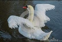 Dreamstime Stock - Animals, Birds, Insects