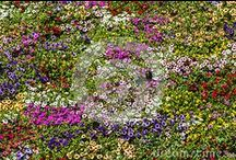 Dreamstime Stock - Plants and flowers / Plants and flowers
