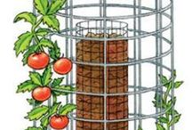 Gardening: plants (tomatoes)