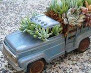 Gardening: plants (succulents)