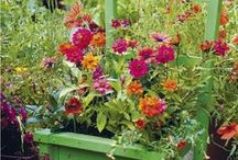 Gardening (planting chairs)