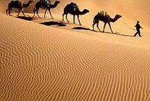 Sivatag ...  Desert ...