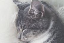 Les chats / Les chats, les chats... LES CHATS ♥