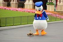 Disney Dreams / On est jamais trop vieux pour regarder du disney.